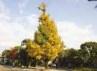 campussansaku_ichou97.jpg