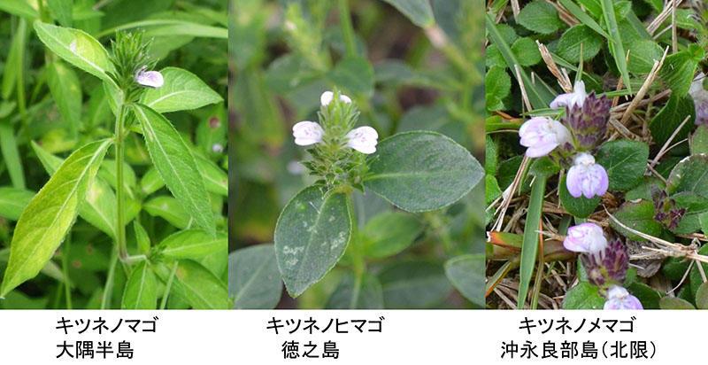201108_okinoerabu_kansatsukai_pic02.jpg