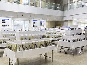 笠沙の海の豊かさを実感。「薩摩半島の魚類」展示のお知らせ(~9/13)