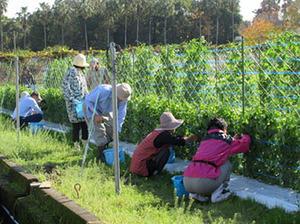 【参加者募集】市民講座「鹿児島の伝統野菜作り教室(全6回)」のご案内