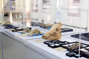 【開催中】約2000万年~500万年前の化石を展示!「タイ王国の化石」のご案内(1/16まで)
