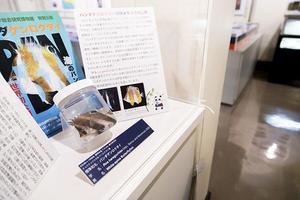 【総合研究博物館】海のパンダ初公開&植物標本レスキュー企画展を開催中(~5/29まで)