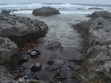 薩南諸島の油類漂着問題に関する鹿児島大学調査ワーキンググループの発足について