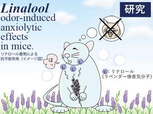 181024_linalool_mouse600px.jpg