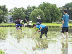 農学部の学生が田植え実習を行いました