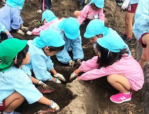 「とったぞー!」吉野の山にこだまするお芋掘り。幼稚園児らが本学施設で芋掘りを行いました