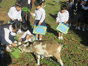 【附属小学校】「だいすき!ヤギさん」教育学部と連携した授業を実施