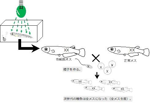190226hikari_osukaramesu_01.jpg