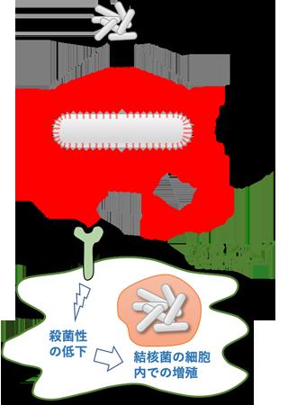 210427_kekkaku_ishigaku.png
