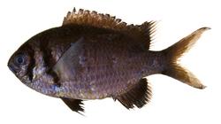 fish05.jpg